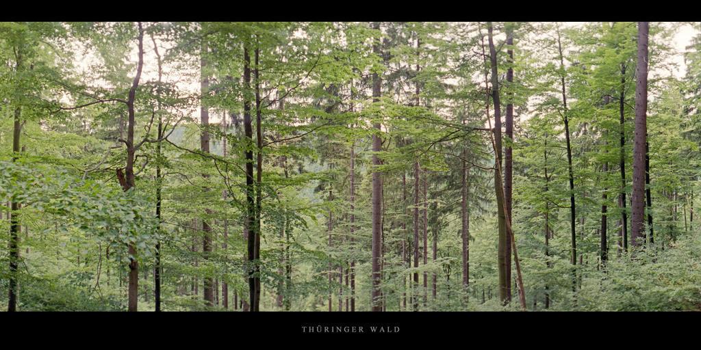 Thüringer Wald   Mischwald mit Fichten und Buchen im Thüringer Wald