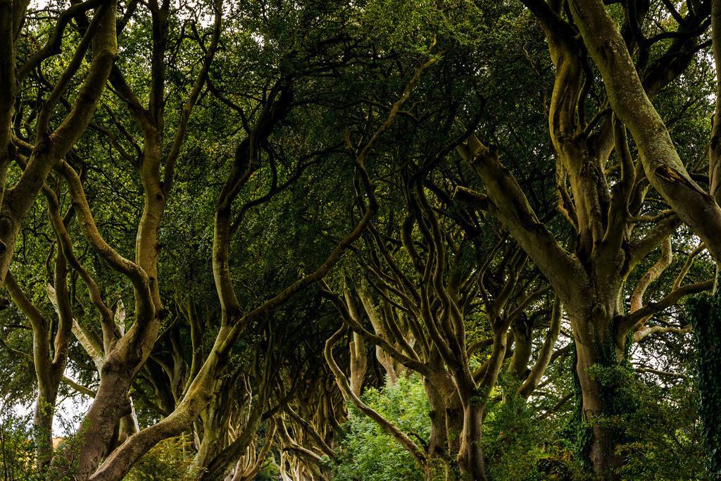 Ireland-Dark Hedges