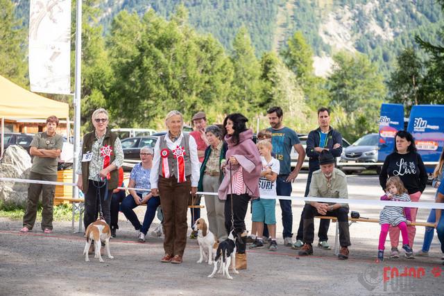 Internationale Zuchtschau in St Moritz   Internationale Zuchtschau Alpenlaendische Dachsbracken sowie Schweizer Niederlaufhunde, Westfaelische Dachsbracken und Petit Bleu de Gascogne in St. Moritz. 14.09.2019 Foto: Leo Wyden