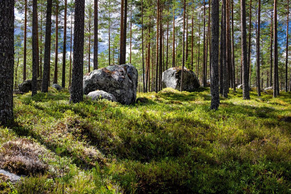 Findlinge im Wald | Große Findlinge in der Region Värmland, in Schweden.