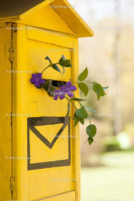 Postkarte Blumenpost   gelber Briefkasten mit lila Blumen im Briefschlitz bei Tageslicht vor einem hellen Hintergrund