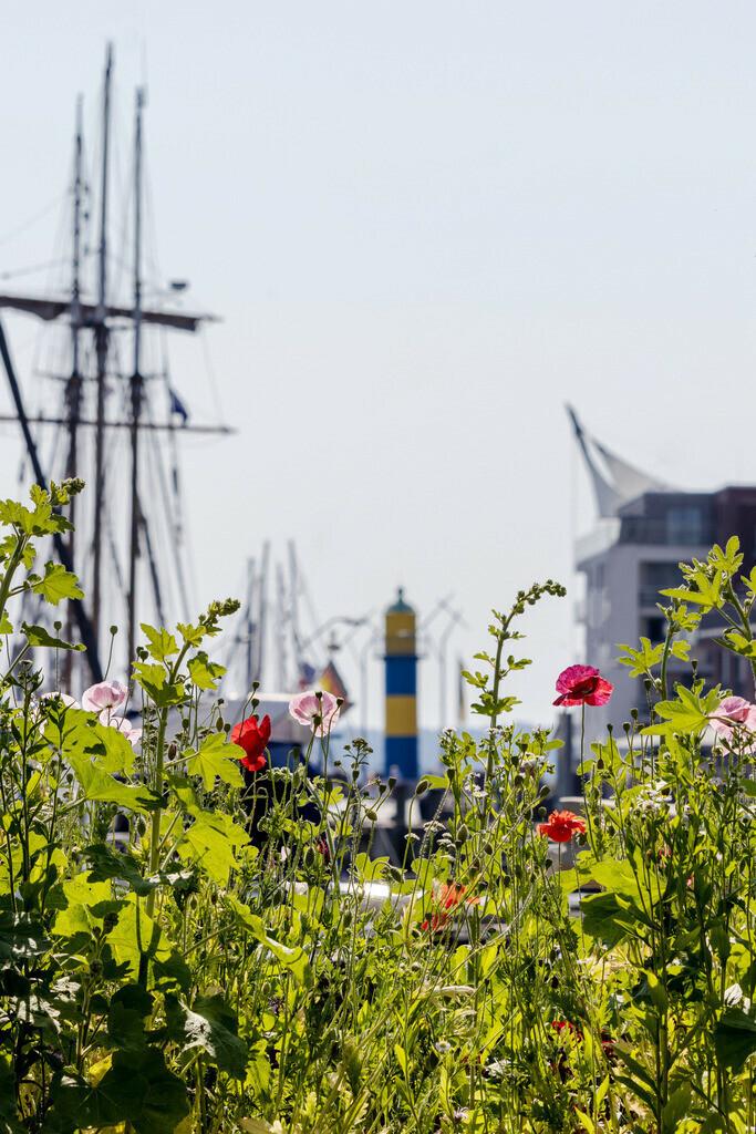 Hafen in Eckernförde | Blumen am Hafen in Eckernförde