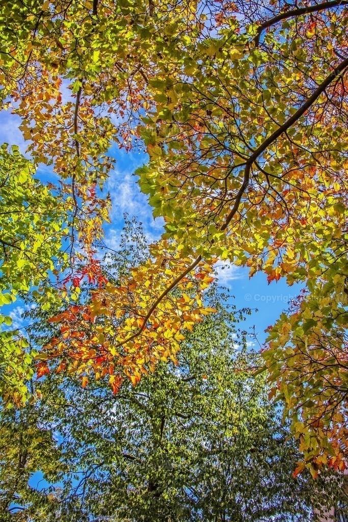 Herbstliche CoronaAmpel