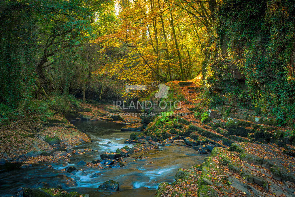 Clare Glens, Co. Tipperary