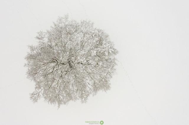 Baum von oben   Verschneiter Baum von oben. Minimalistische Ansicht