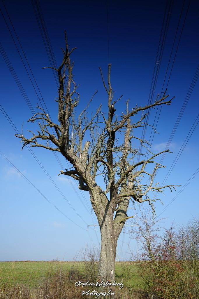Biotree | Ein knorriger Baum greift nach den Stromleitungen um Energie zu bekommen...