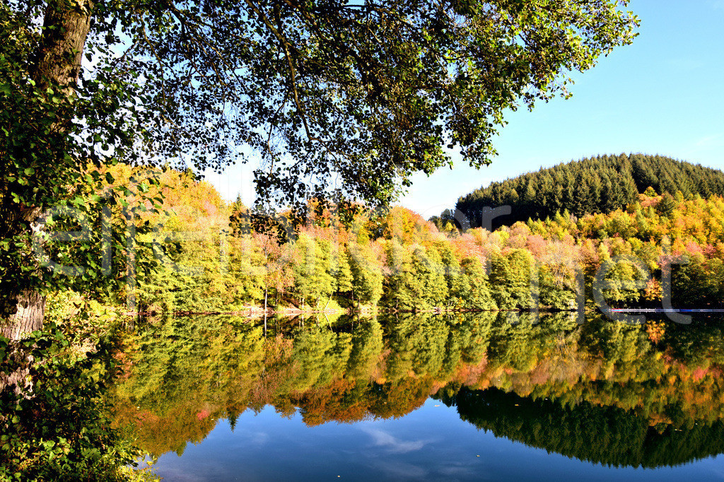 Das Gemündeter Maar im Herbst   Daun Gemünden, Vulkaneifel