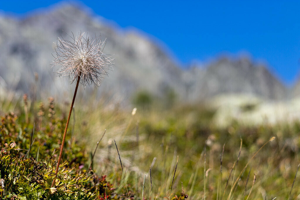 Pflanze in den Bergen