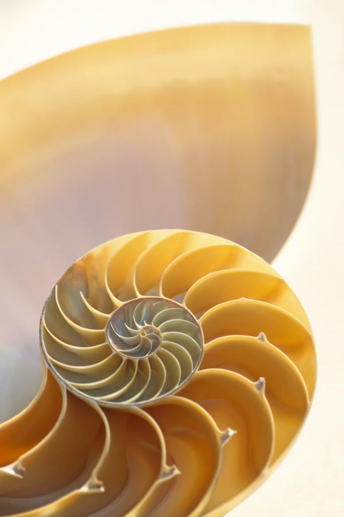Best. Nr. kreativität03   Blick ins Innere eines Nautilus-Gehäuses