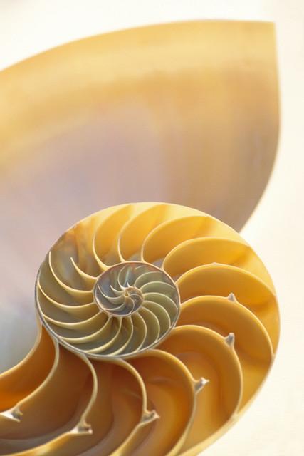 Kreativität 03 | Nautilus