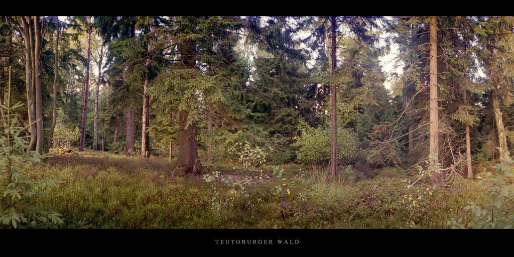 Teutoburger Wald   Nadelwald im Teutoburger Wald