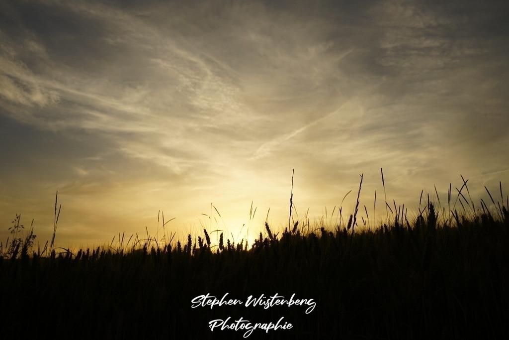 Sonnenuntergang im Kornfeld | Sonnenuntergang zwischen Ähren eines Kornfeldes und strukturierten Himmel