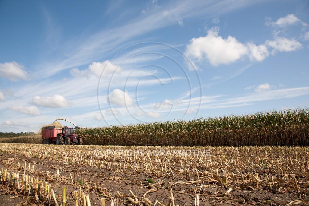20080914-IMG_8973   Silomais wird gehäckselt - AGRARFOTO Bilder aus der Landwirtschaft