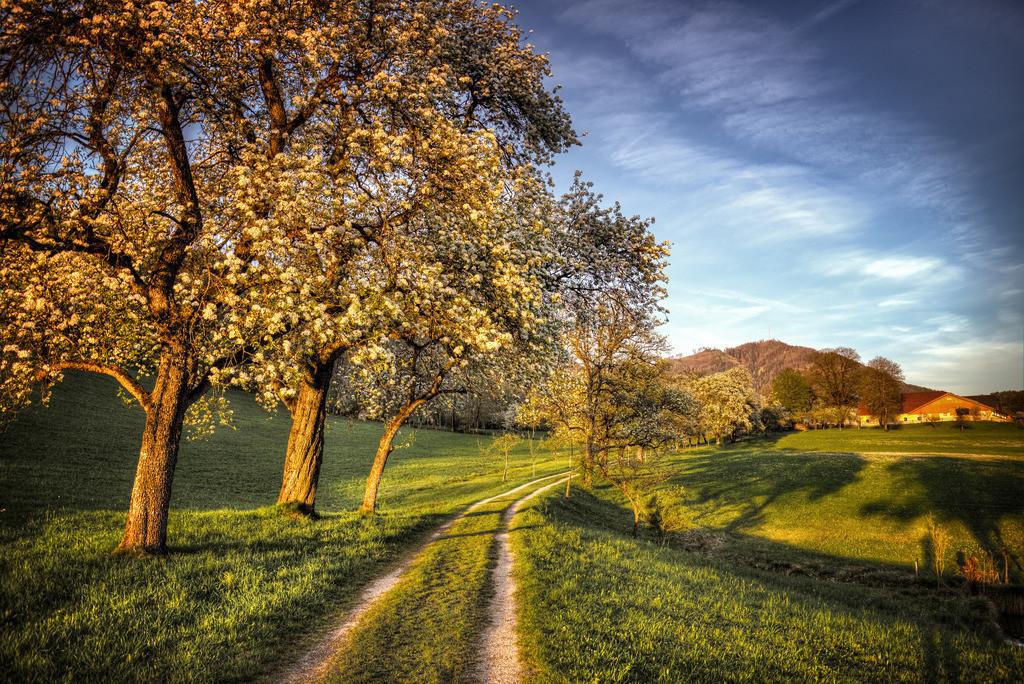 Birnenblüte | Rading Roßleithen