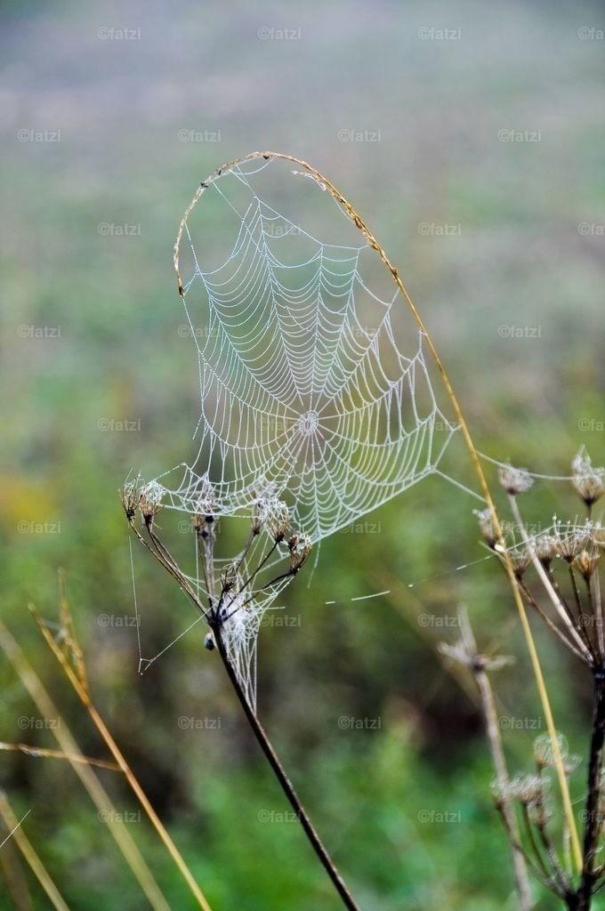 spinnennetz-10-11_002_1