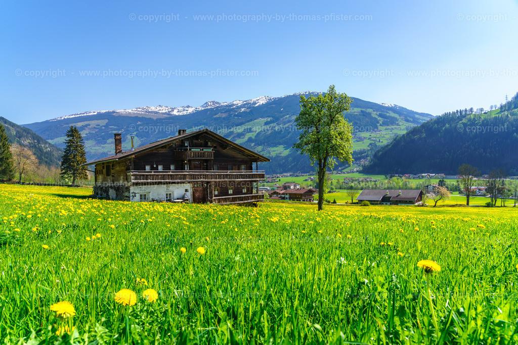 Frühling in Laimach im Zillertal-3