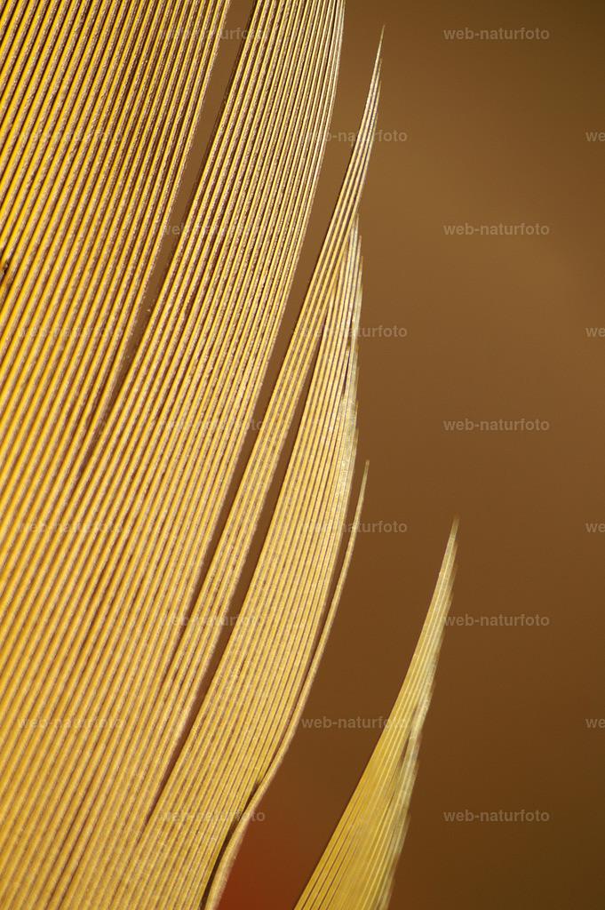 PICT0018_bearbeitet-1   KONICA MINOLTA DIGITAL CAMERA