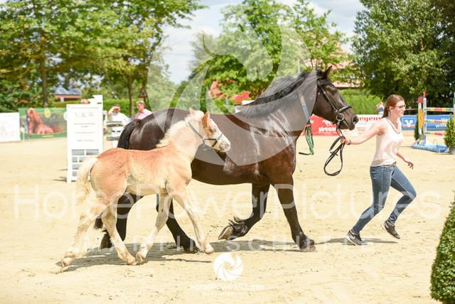 RFV Ochtrup - Fohlenparade-0854