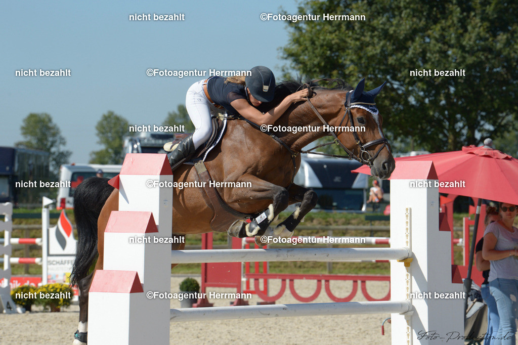 20190915-ND4_6877   Horse Gym´s Sternchen, 2019, Honsolgen