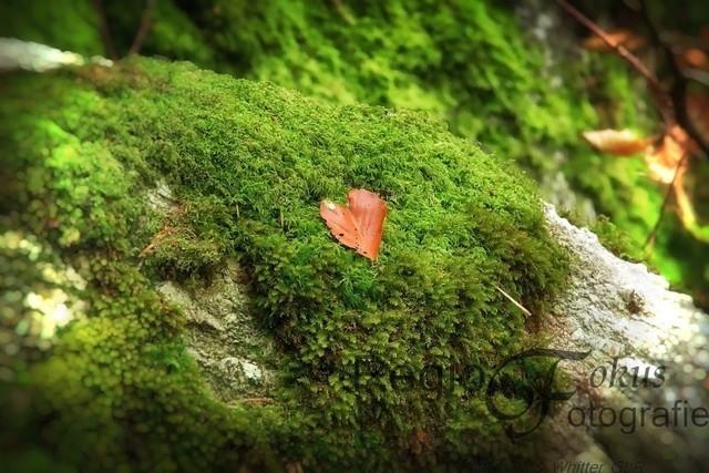 Von Herzen | Herzförmiges Blatt auf moosigem Untergrund