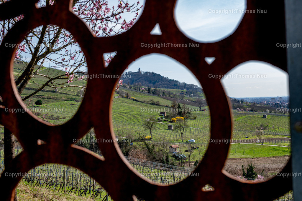 DSC_4772 | Bensheim, Weinberge zwischen Bensheim und Heppenheim, es ist die schönste Jahreszeit an der Bergstraße, die Mandelblüte verzaubert, die Weinberge laden zum bei warmen Tepmeraturen zum Spaziergang ein,  Bild: Thomas Neu