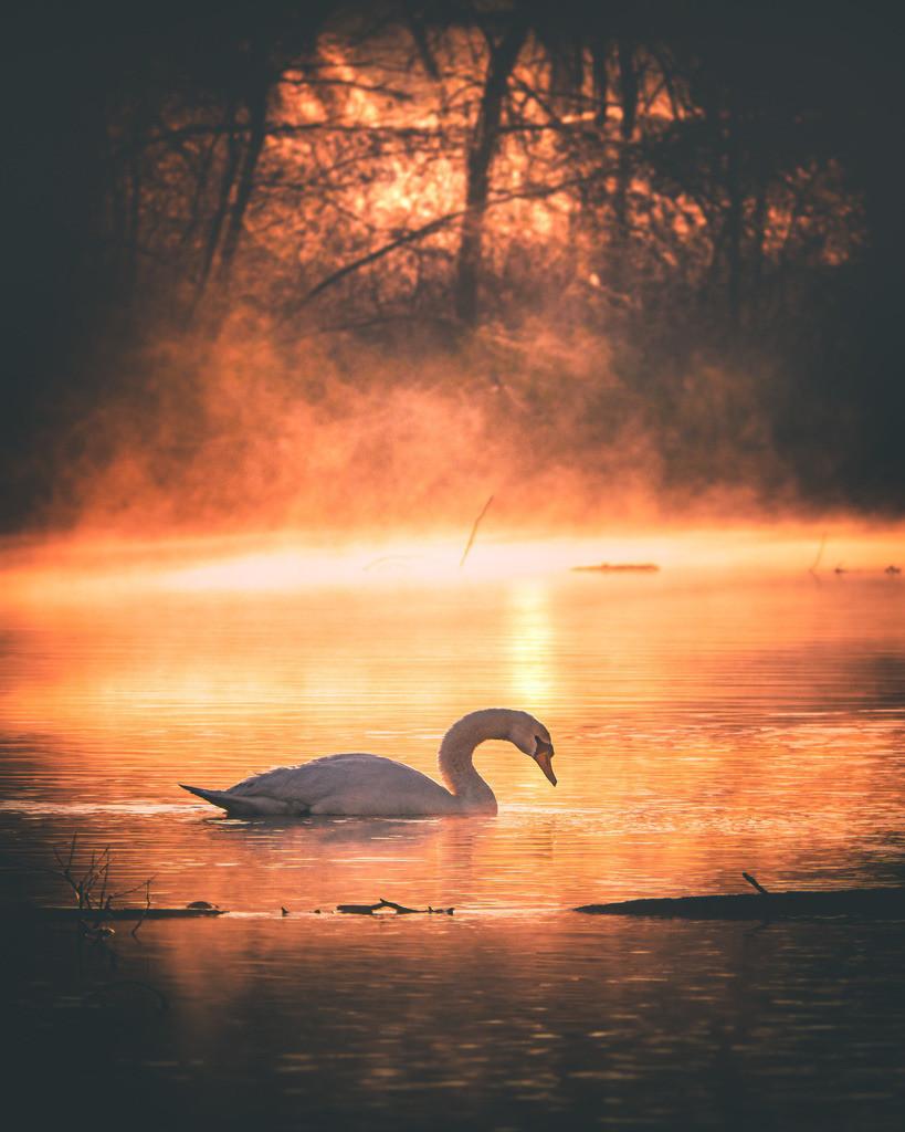 Rheinauen im Morgenlicht | Rheinauen bei Schwanau-Wittenweier im winterlichen Morgenlicht
