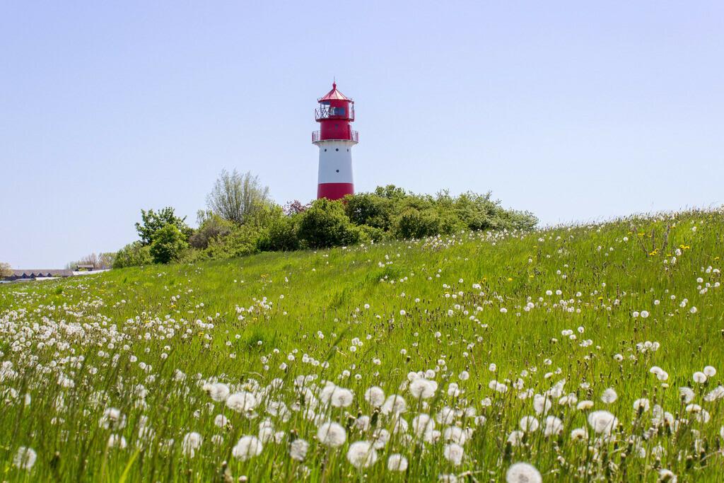 Frühling an der Ostsee   Graskoppel mit Pusteblumen am Leuchtturm in Falshöft im Frühling