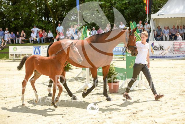 RFV Ochtrup - Fohlenparade-0818
