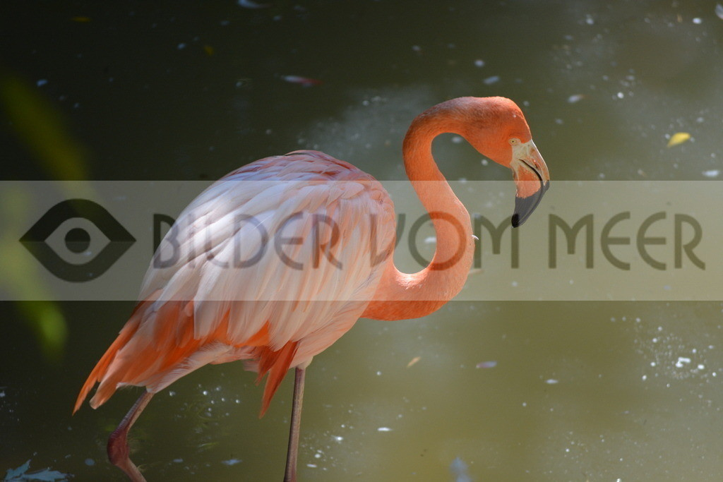 Flamingo Art Bilder | Rosa Flamingo Art Bilder