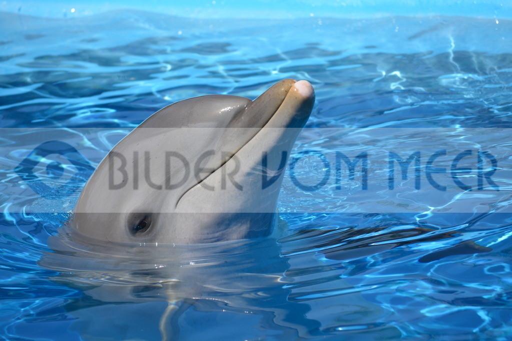 Delfin Bilder | Foto Delfin Spabien