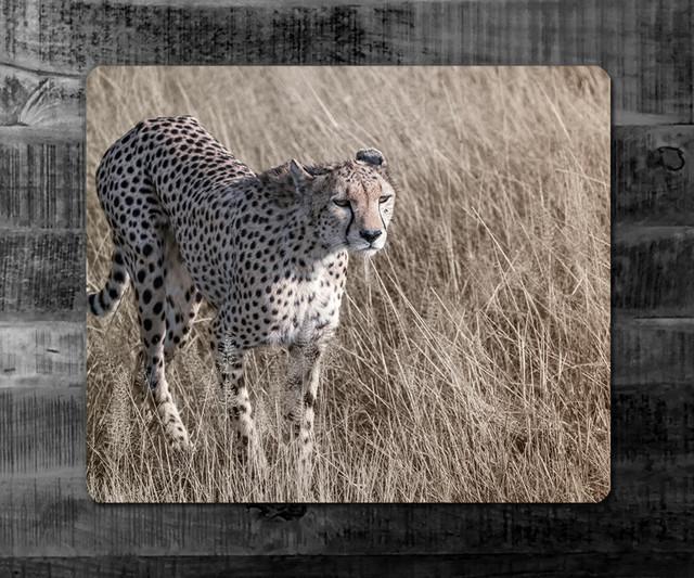 GEPARD | Kenia