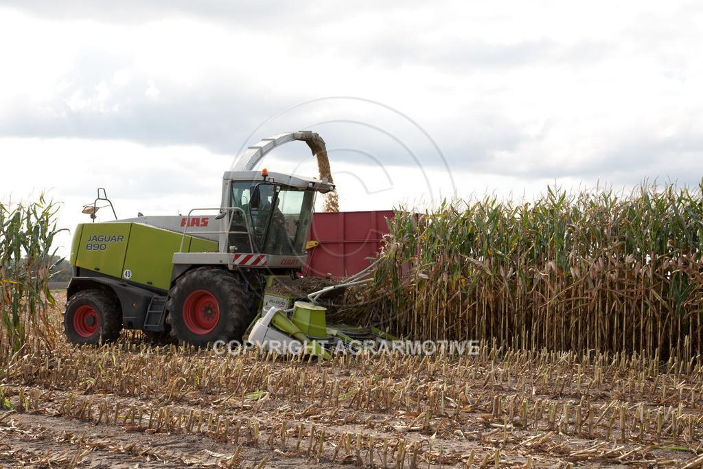 20080914-IMG_9080 | Silomais wird gehäckselt - AGRARFOTO Bilder aus der Landwirtschaft