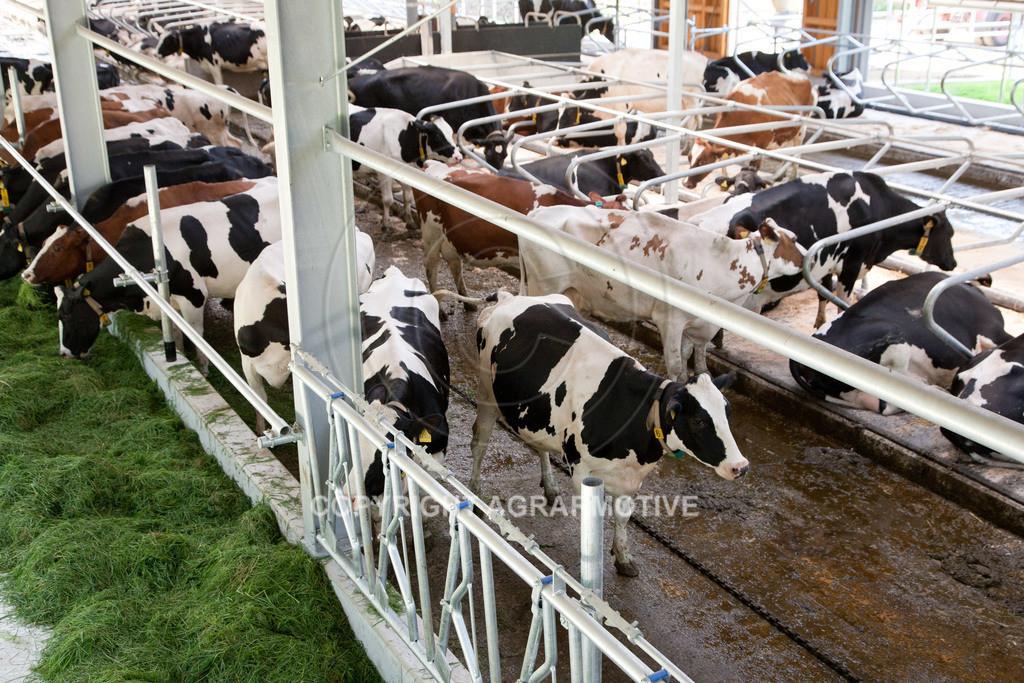 20110627-IMG_3158 | Milchkühe im Boxenlaufstall
