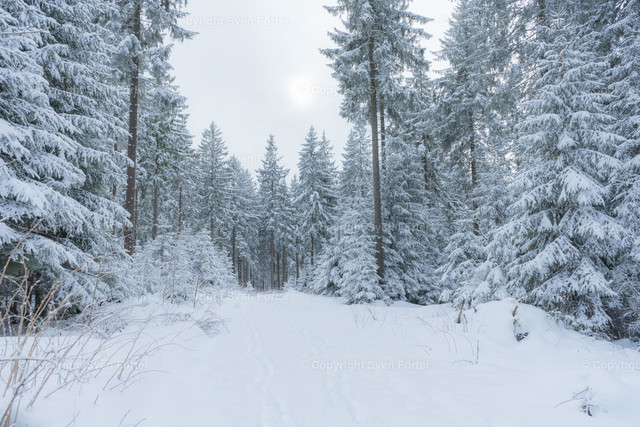Winter-00005
