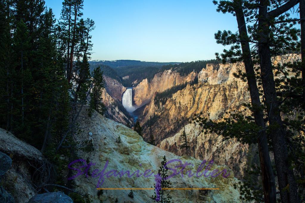 Lower Falls from a distance   Grand Canyon of Yellowstone mit Lower Falls im Hintergrund im morgendlichen Licht