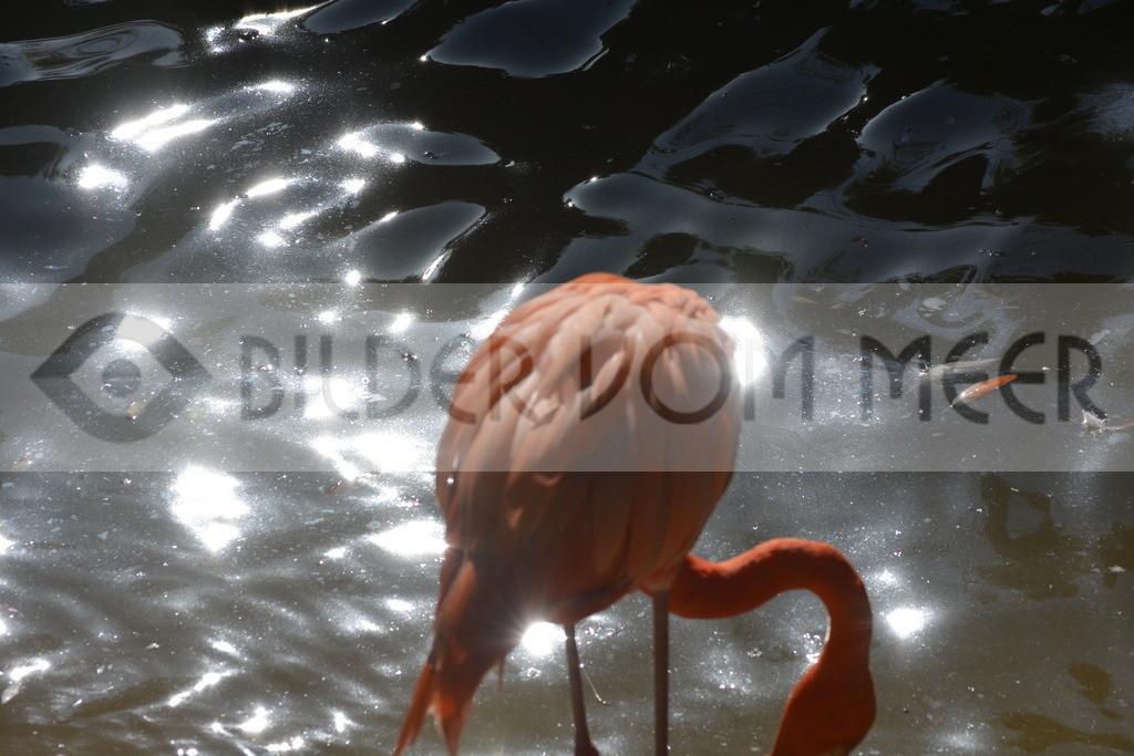 Bilder Sonne   Flamingo Bilder Italien