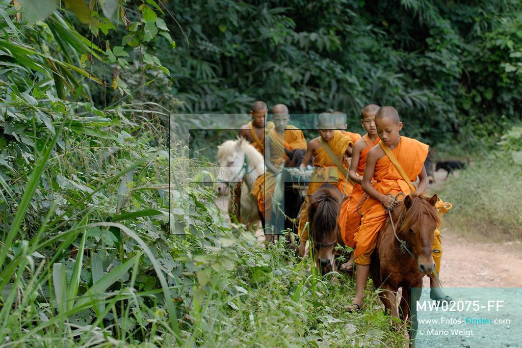 MW02075-FF | Thailand | Goldenes Dreieck | Reportage: Buddhas Ranch im Dschungel | Junge Mönche sammeln Almosen am Morgen  ** Feindaten bitte anfragen bei Mario Weigt Photography, info@asia-stories.com **