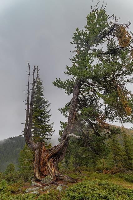 Der Baum | Kraft der Natur im Sinnbild eines Baumes