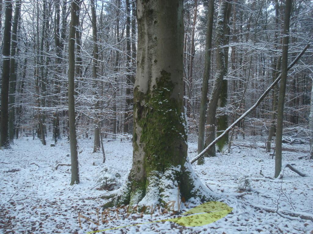 Kraftbaum im Winterzauber