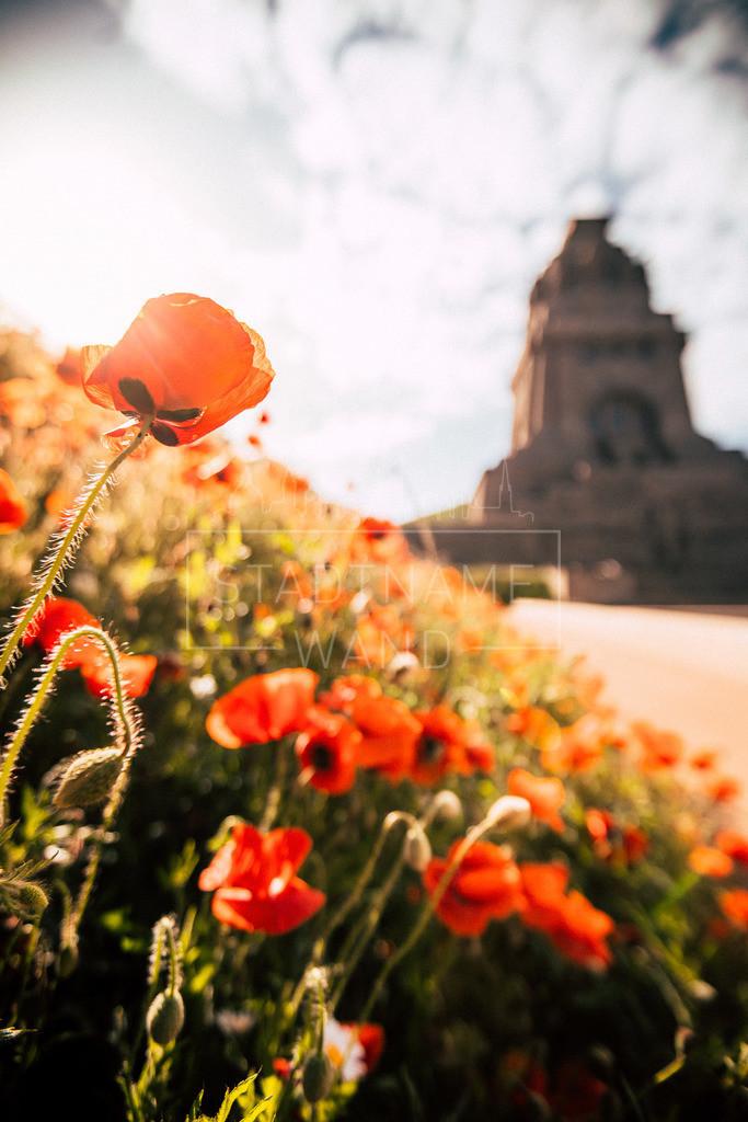 Völkerschlachtdenkmal im Mohnblütenmeer 1