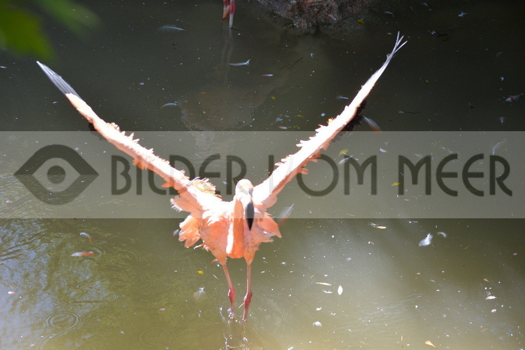 Flamingo Art Bilder | Rote Flamingo Art Bilder