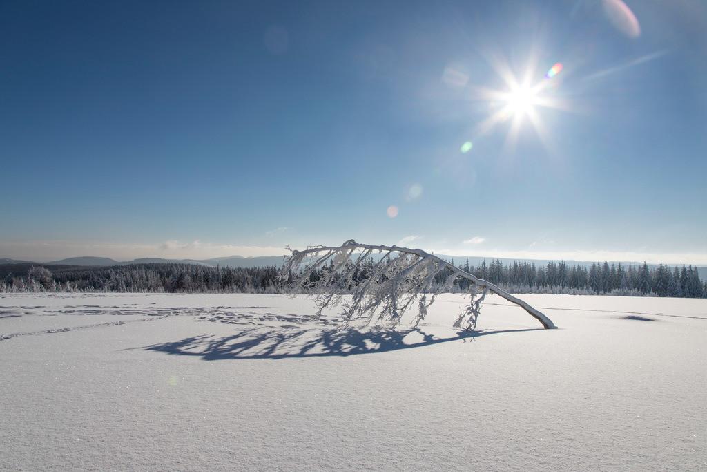 JT-170116-149 | Winter auf dem Kahlen Asten, Sauerland, höchster Berg in NRW, tief verschneite Landschaft
