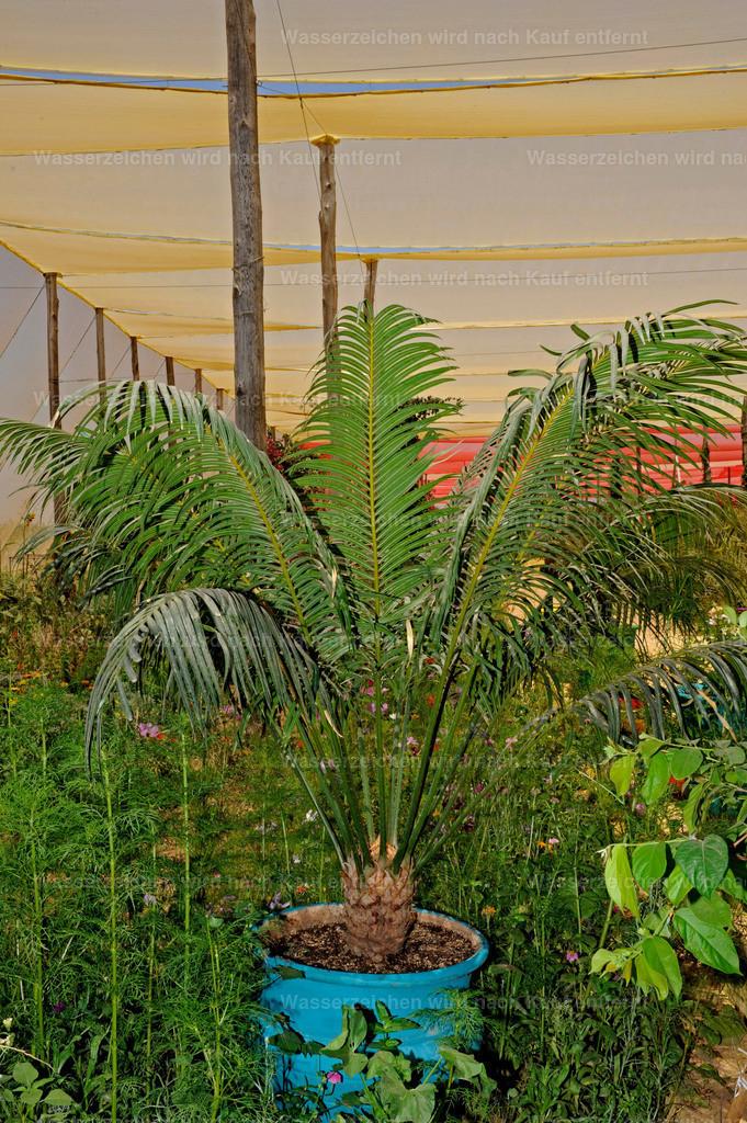 Marokkanische Pflanzen | Marokkanische Pflanze