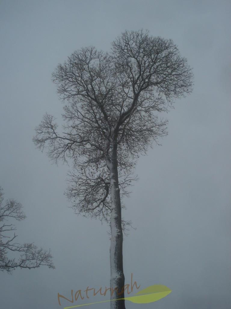 Klosterbaum im Winterzauber 2
