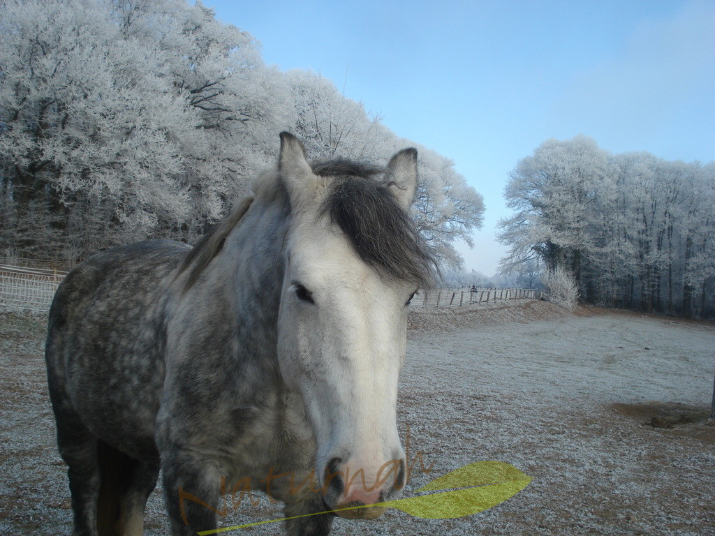 Herzenspferd im Winter