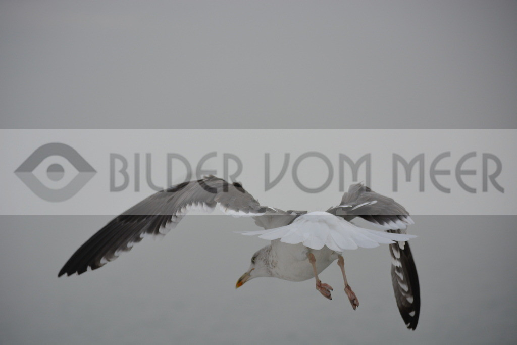 Fotoausstellung Meer Bilder | Nöwe über dem Atlantik