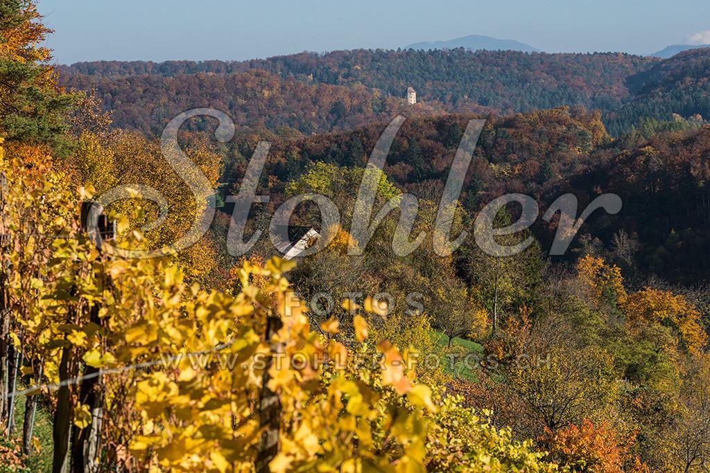 Im Rebberg, Ziefen (BL) | Im Rebberg mit Blick zum Schloss Wildenstein und dem Wiesenberg (1004 m), Ziefen im Kanton Baselland.