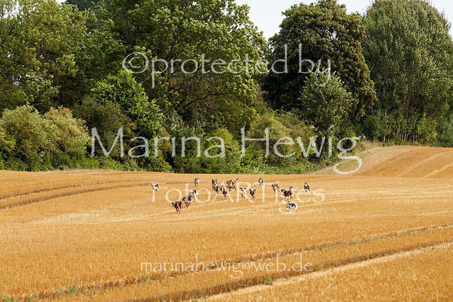 Jagd Knoop 217124_Marina Hewig