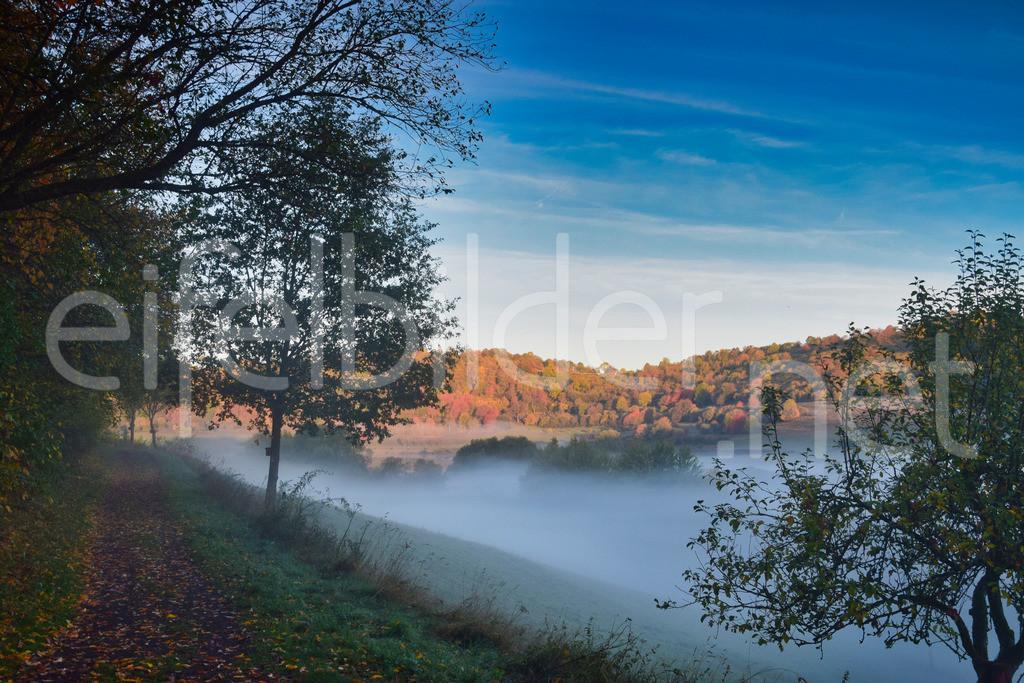 Herbst & Morgennebel am Schalkenmehrener Maar | Daun Schalkenmehren, Eifel / Vulkaneifel