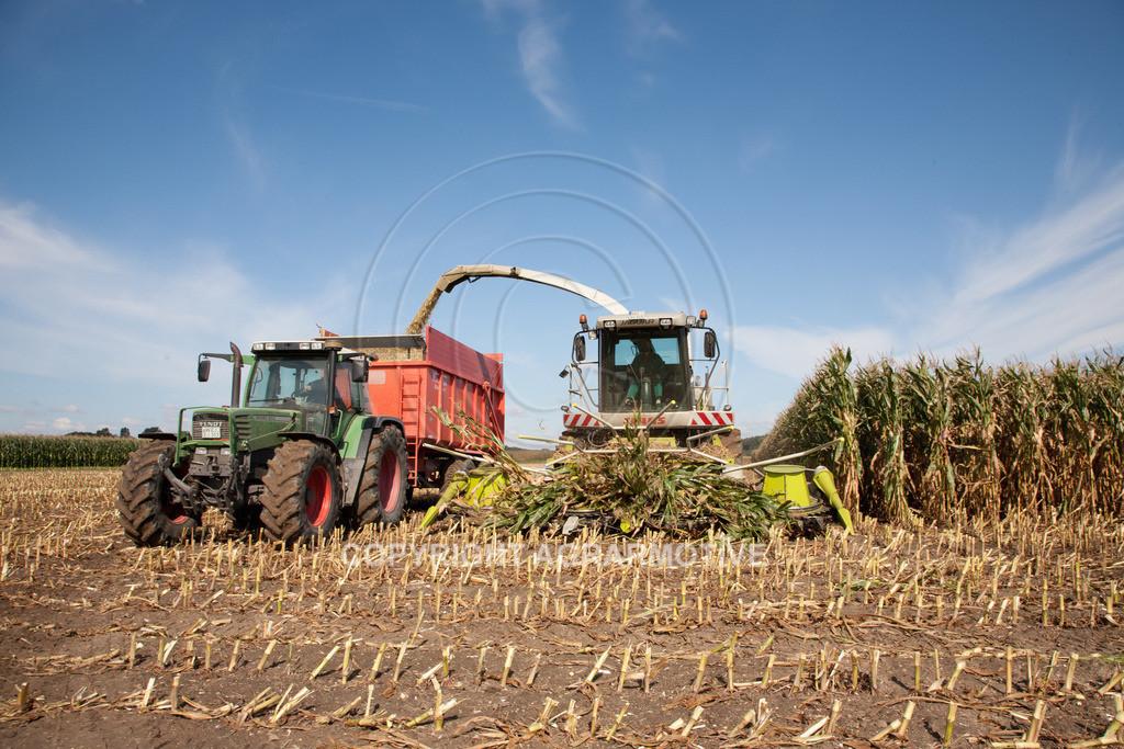 20080914-IMG_8954 | Silomais wird gehäckselt - AGRARFOTO Bilder aus der Landwirtschaft